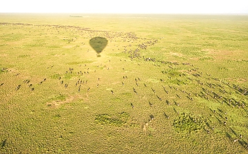 Serengeti Baloon adventures