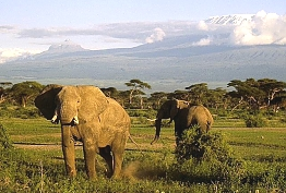 Elephants in Tsavo national Park